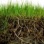 guida-alla-coltivazione-dell-orto-il-terreno-agrario
